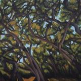 Tangled Oaks